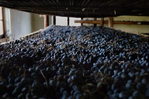 The drying of grapes