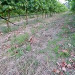 Clay soil - Haritatos vineyard